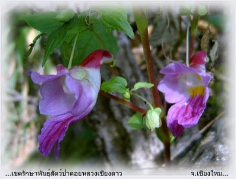 Bunga Cantik Berwujud Seperti Burung Beo